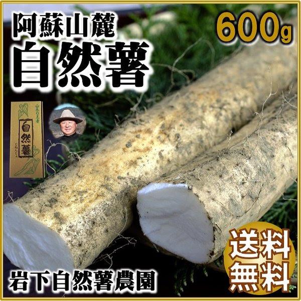 熊本・阿蘇産岩下農園の自然薯